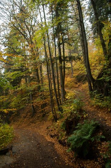 Galeria Międzygórze - Igliczna - szlakiem zielonym